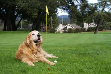 A view of hole #4 guarded by a dog at Valley Gardens Golf Course